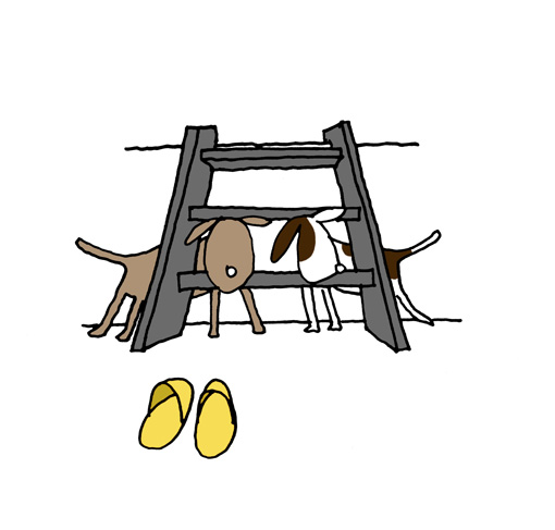 犬1.jpg